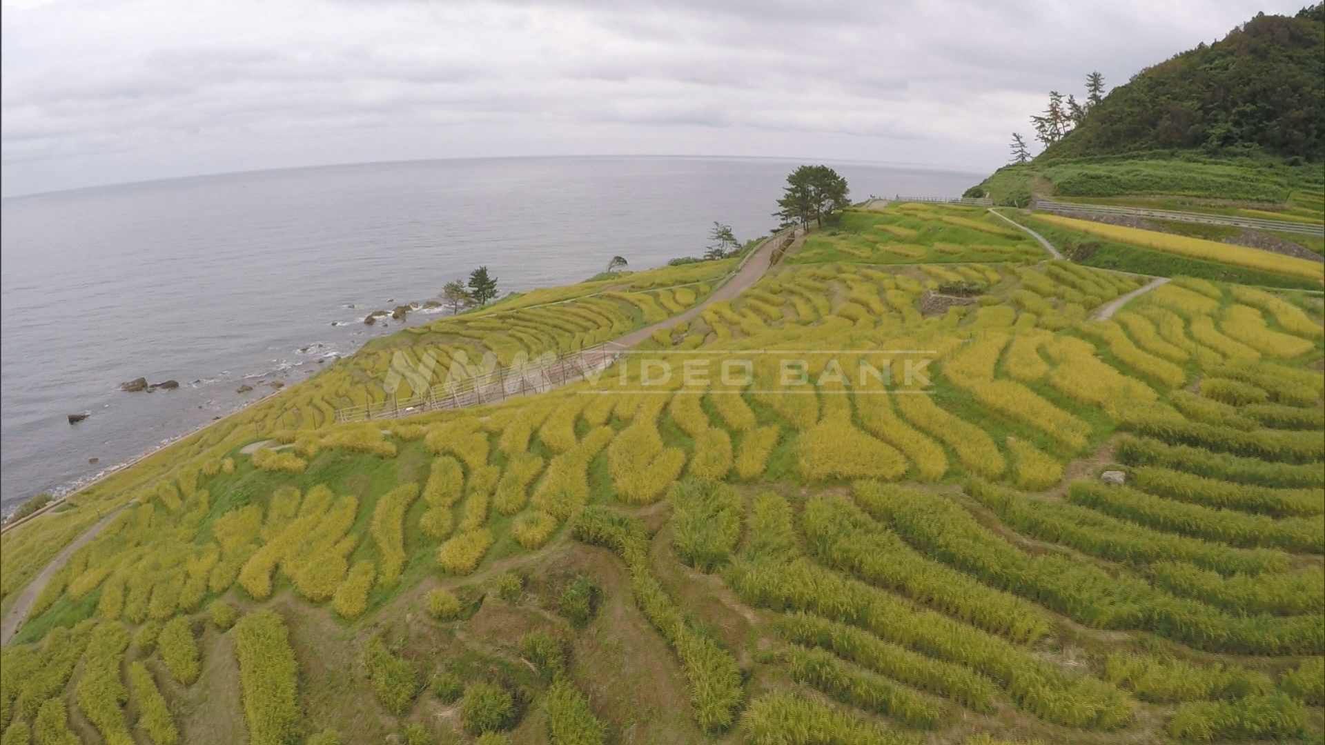 Drone shot: agricultural heritage, Shiroyone terraced rice paddies, Japan