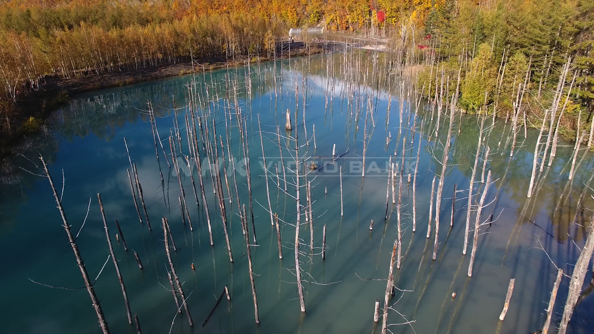 Drone shot: mysterious blue pond colored brightly in autumn scene, Hokkaido
