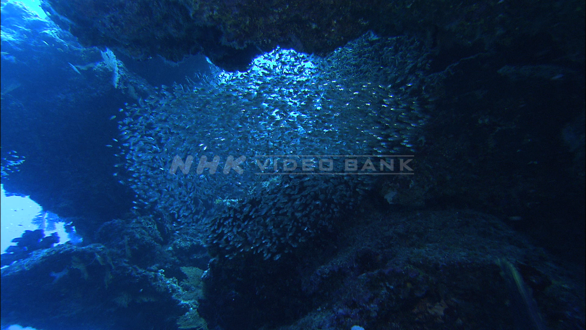 Underwater: the beautiful sea off Kikai Island, southern Japan